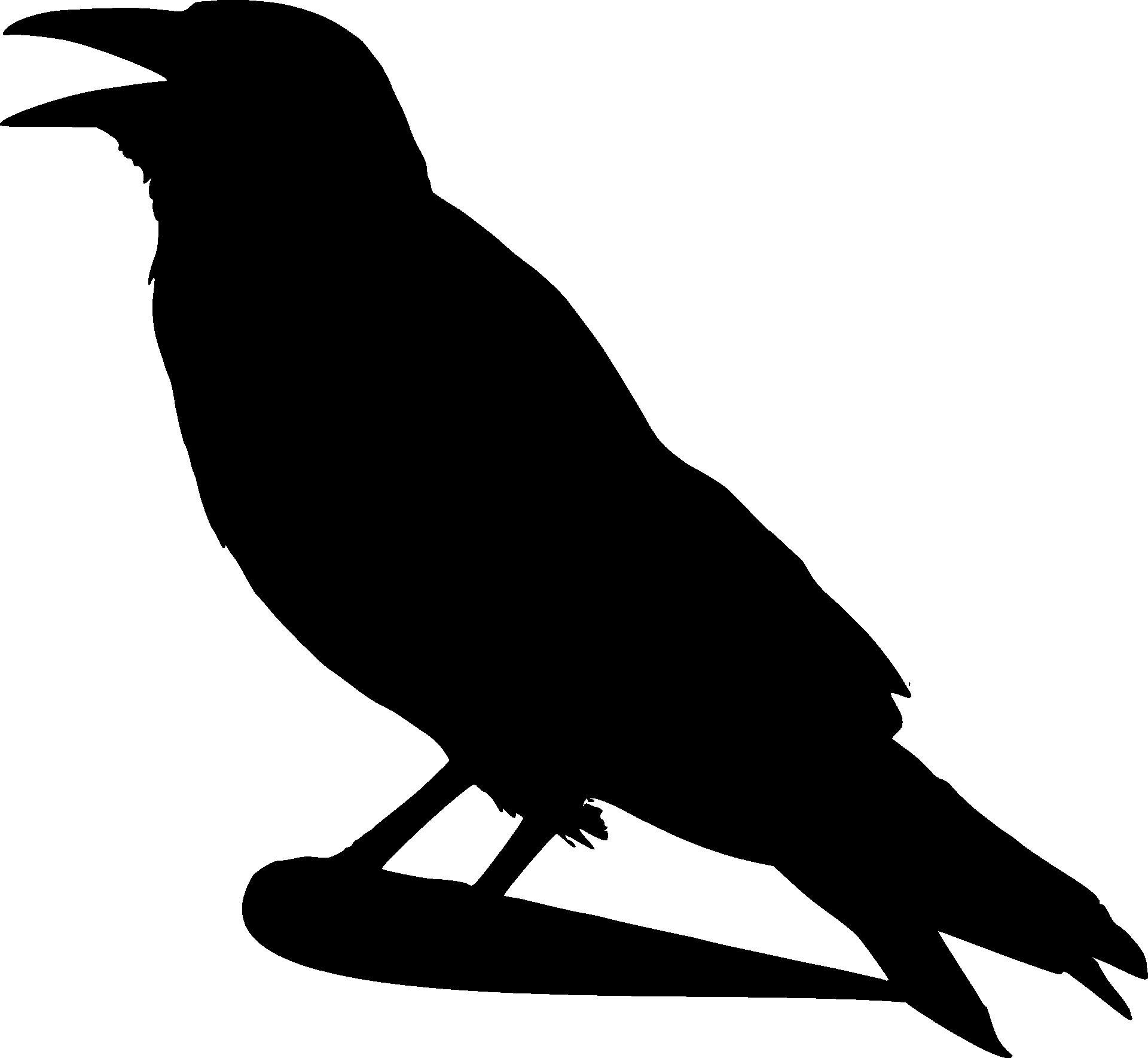 crow-41248.png