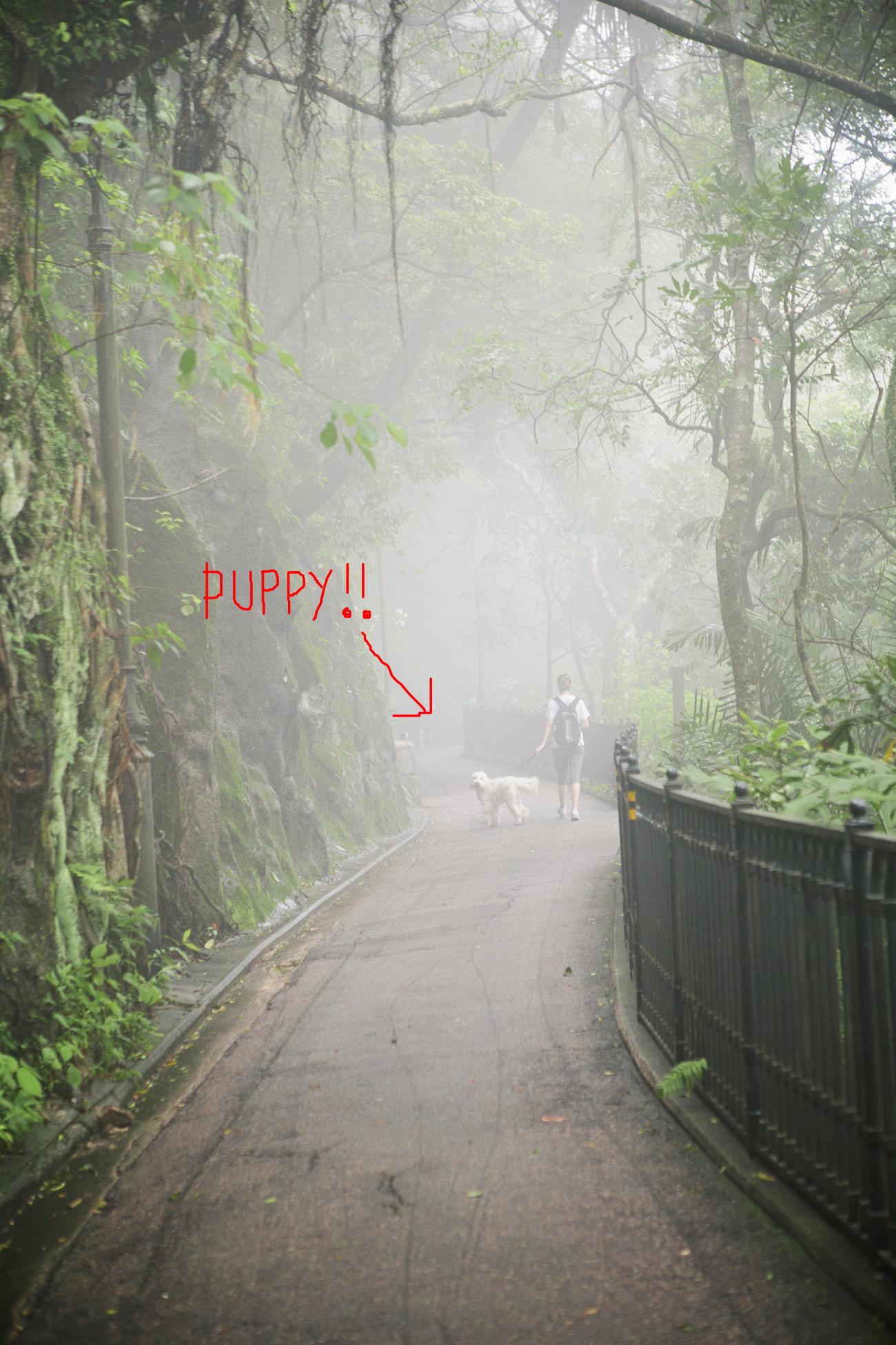puppy hiker.