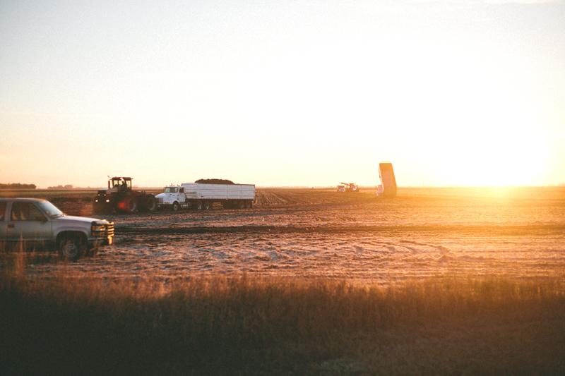 morningfarm5.jpg