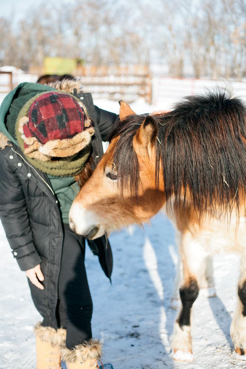 horse-5.jpg