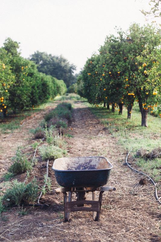ojai farm-11.jpg