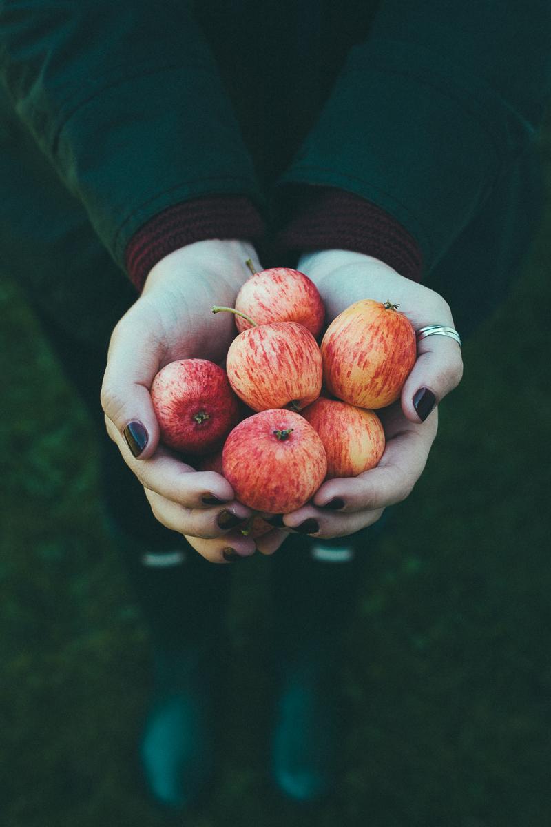 apple-picking-party-7.jpg