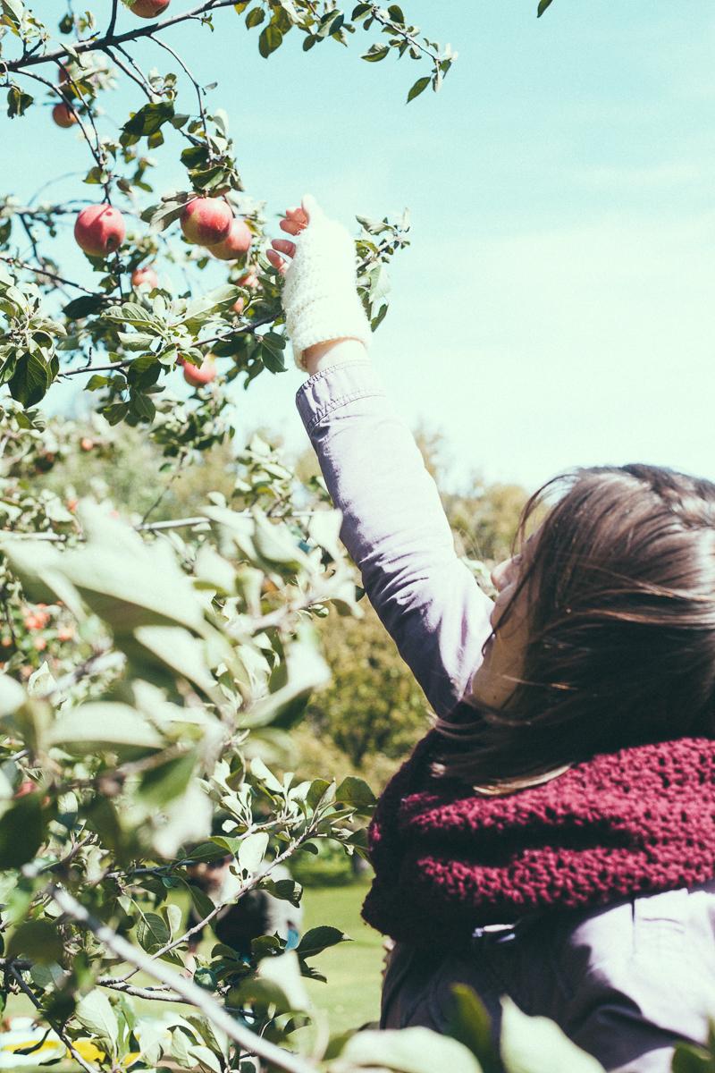 apple-picking-party-5.jpg