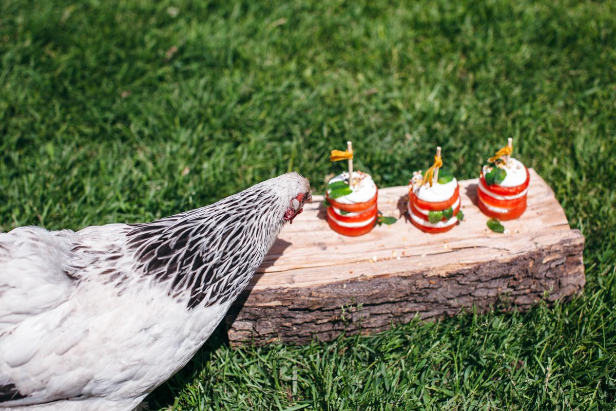 watermelon cakes-25.jpg