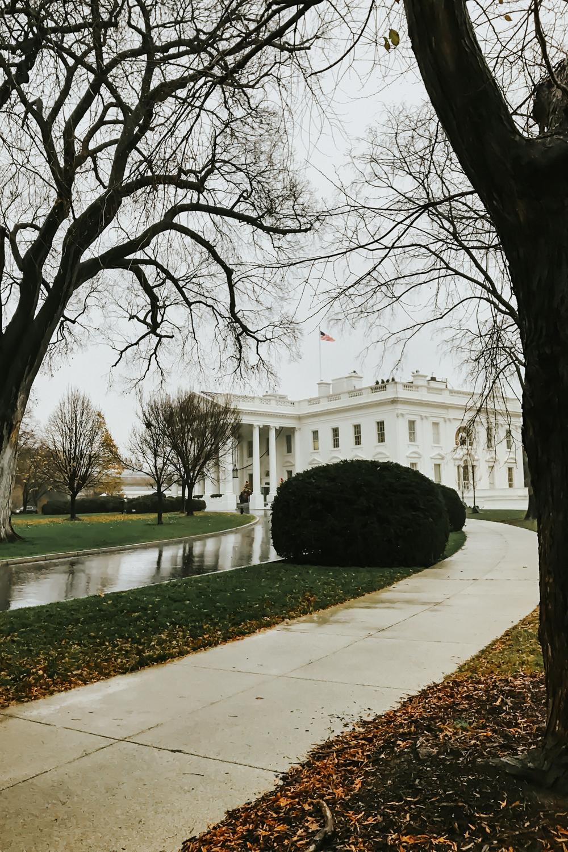 white house-8.jpg