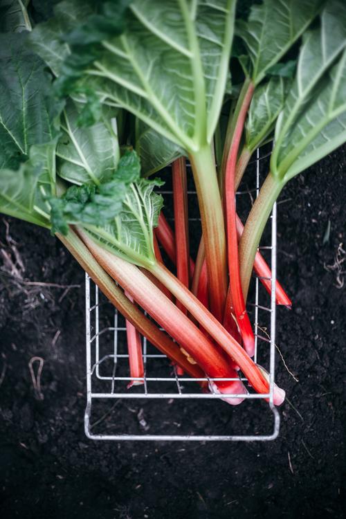 rhubarb short ribs-18.jpg
