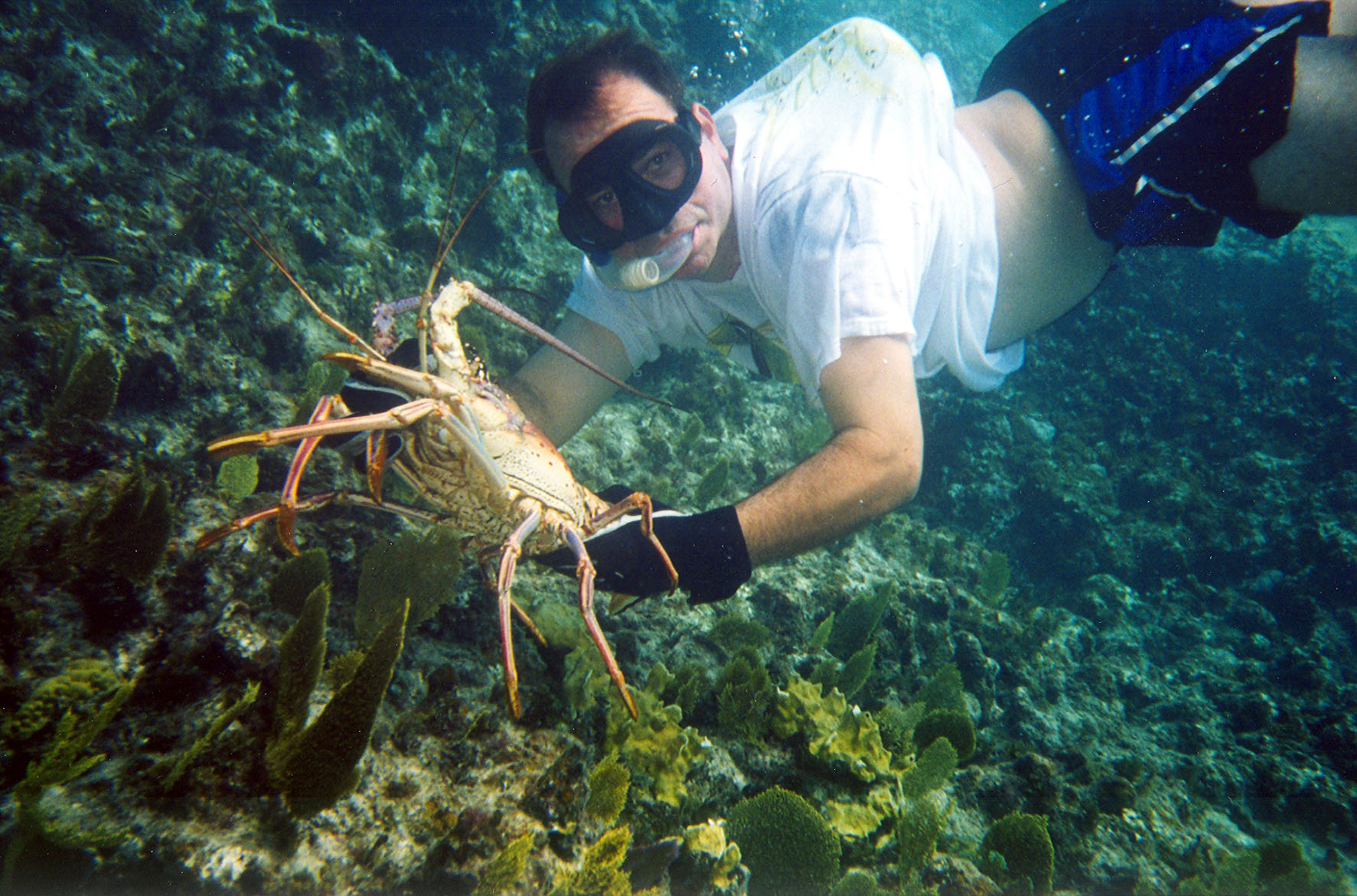Lobster Crawl.jpg