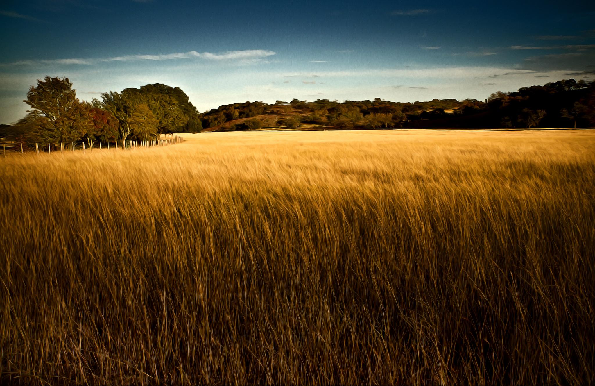 Hay-Field-Kerrville-TX.jpg