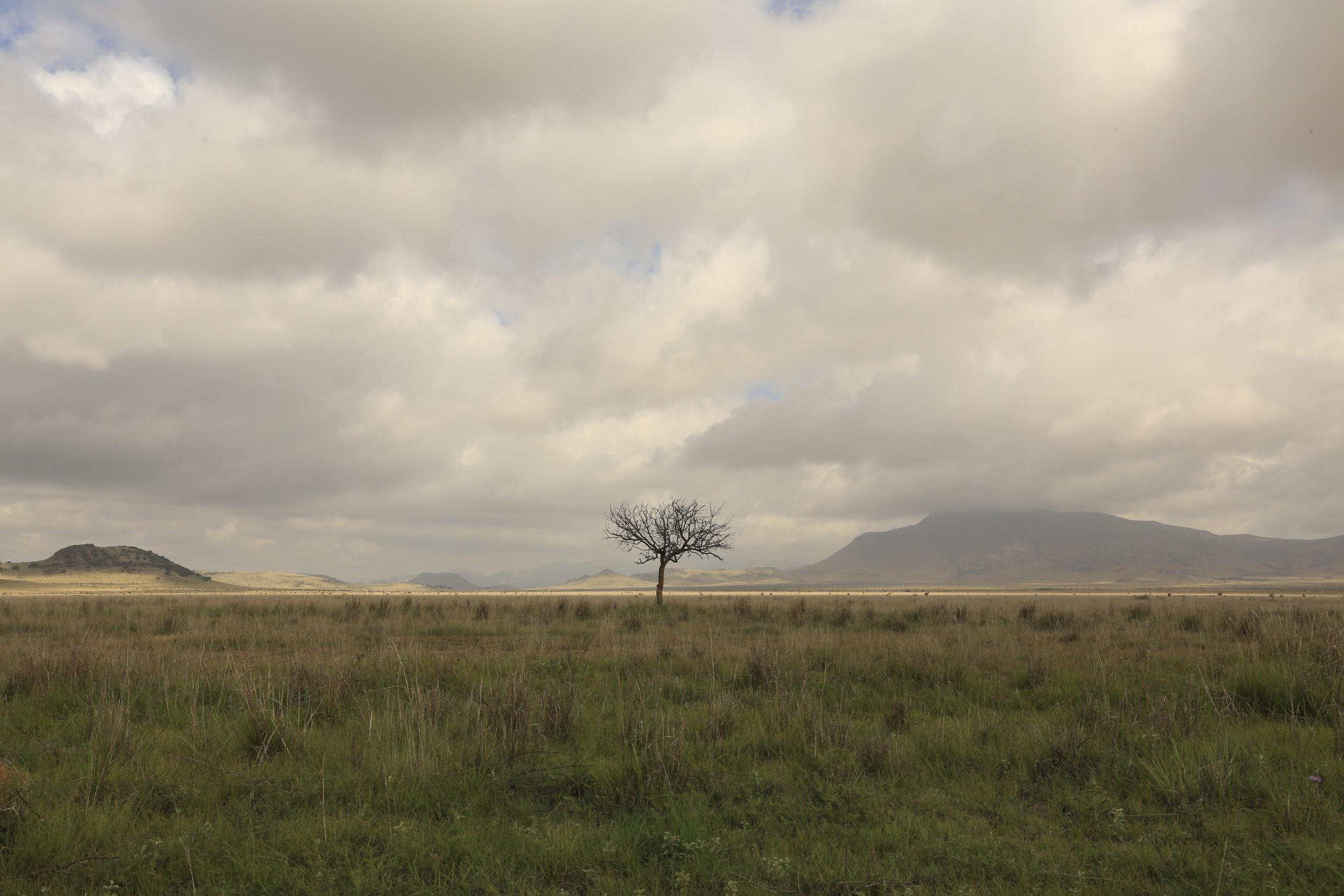 Lone tree on the way to Marfa