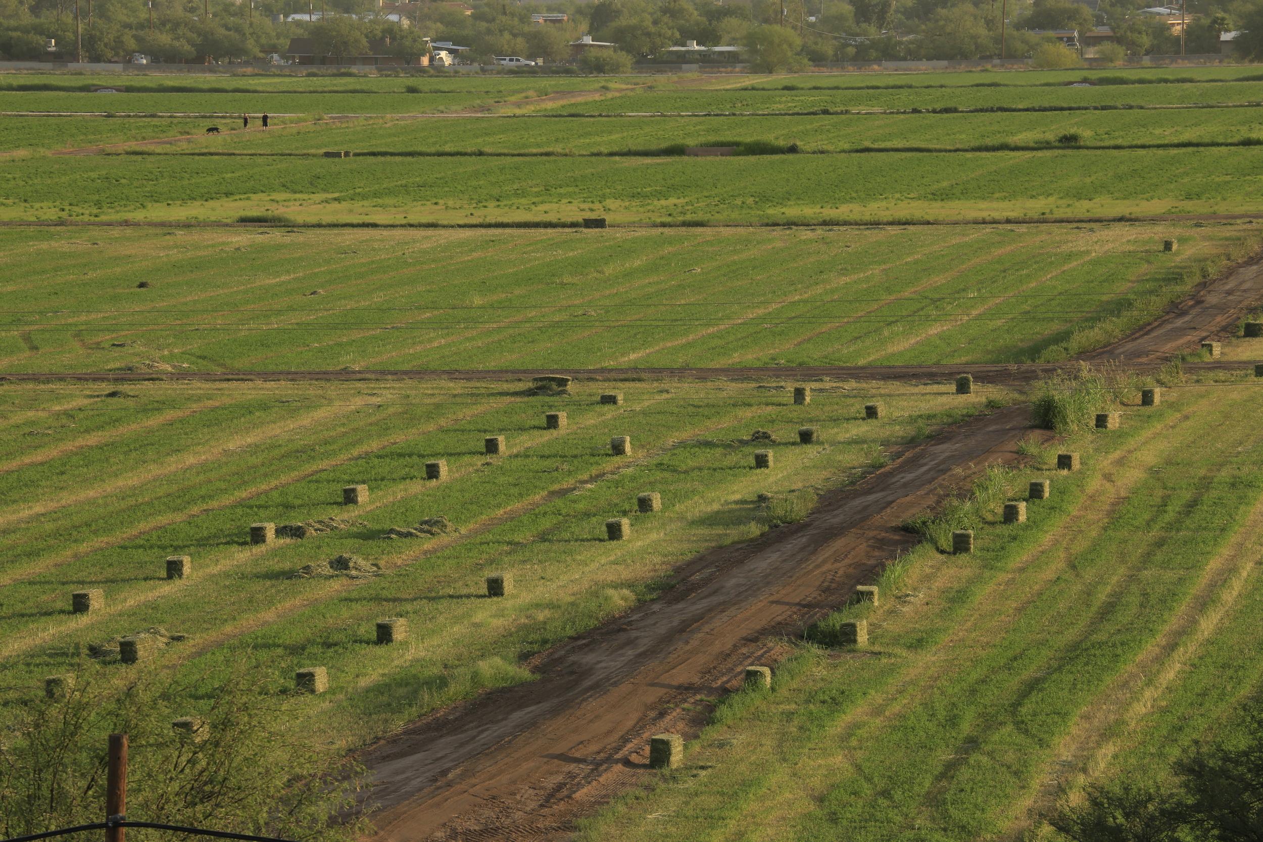 Hay being baled at San Xavier Farms
