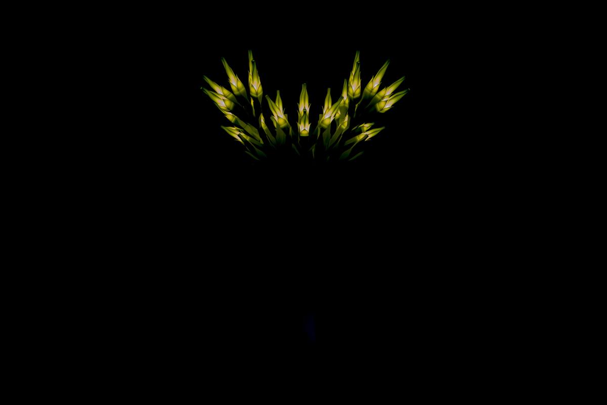 05/18/2015  작은 희망이 어둠을 밝히다. A little hope lights up the darkness.