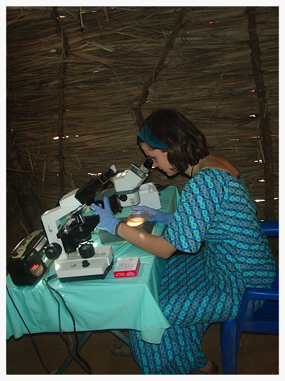 Using a microscope to collect schistosome larvae