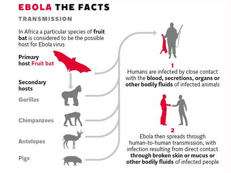 Image Copyright of The Independent - http://www.independent.co.uk/life-style/health-and-families/health-news/ebola-virus-pandemic-should-be-treated-the-same-way-as-threat-posed-by-nuclear-weapons-security-officials-say-9771219.html