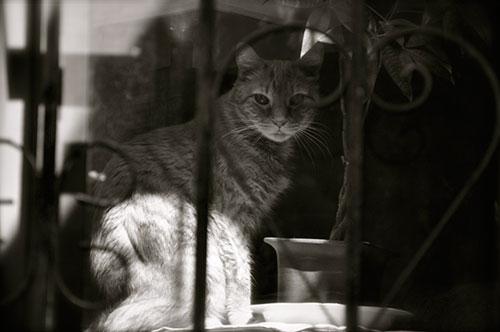 19-CatsDogs-LR.jpg