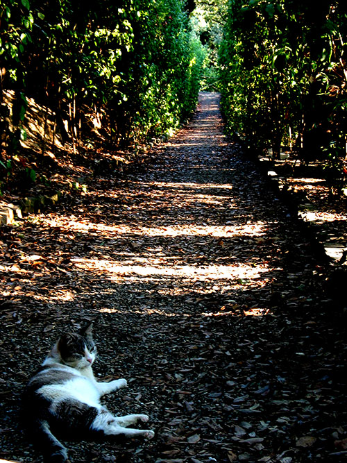 Cat chillin' in Boboli Gardens, Florence