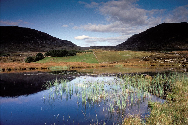 Fergus Bourke_Wet Grasses.jpg