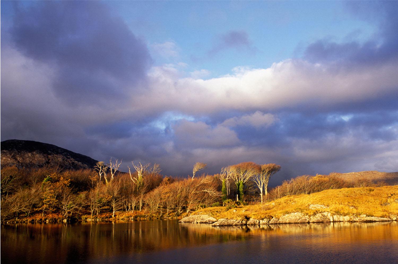 Fergus Bourke_Treescape.jpg