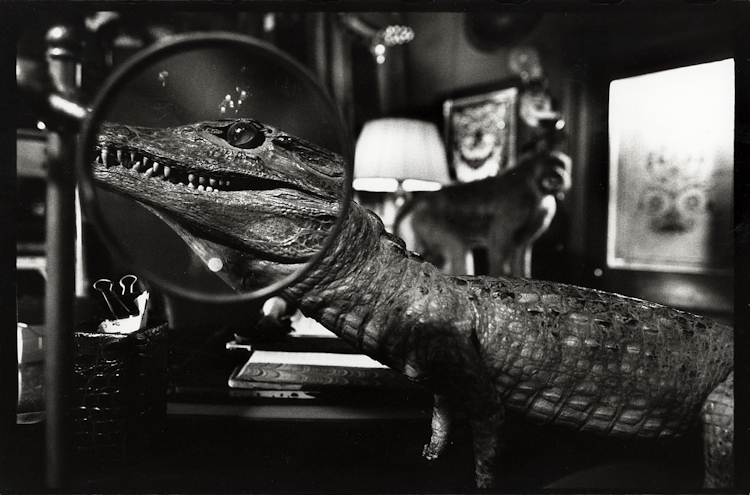 3kmtg_aligator_set_cc-2.jpg