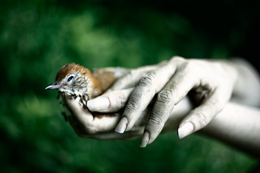 Bird-In-Hand.jpg