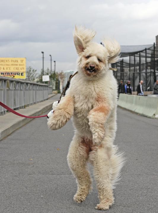 Dog_Walk.jpg