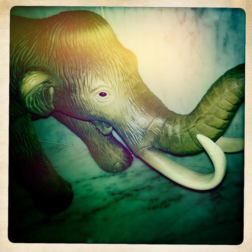 Elephant-sm.jpg
