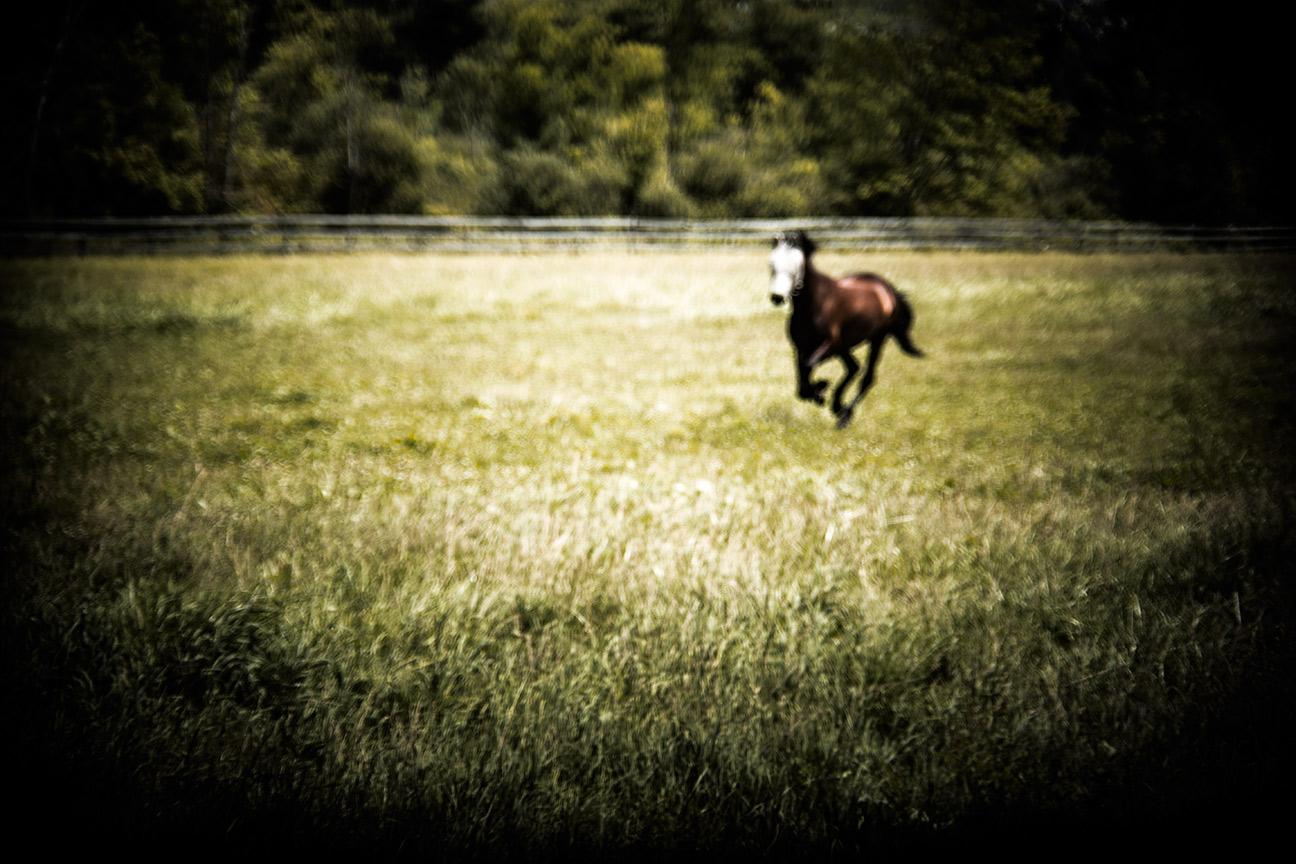 Horse_7919
