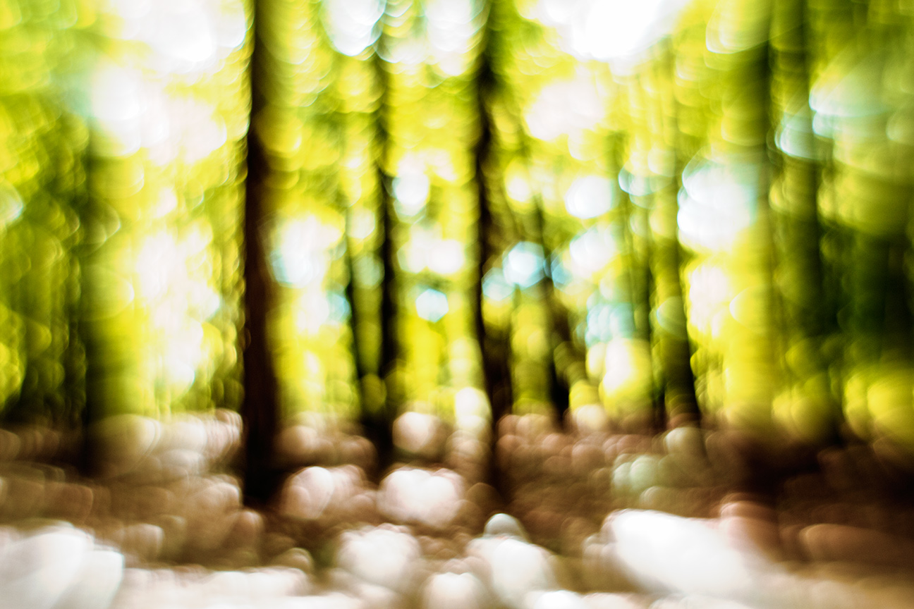 Forest-Yellow_0761