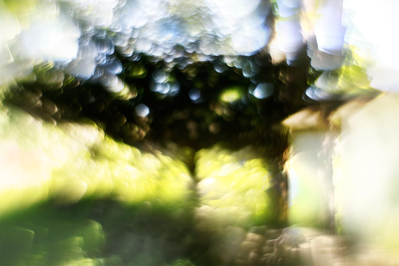 Tree-and-Hut_0049