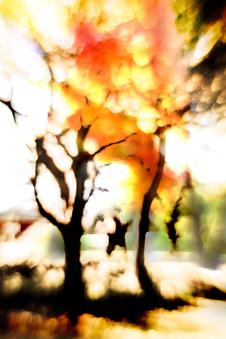 Trees_2710