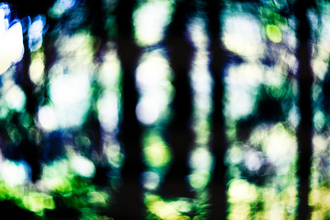 Forest_2206