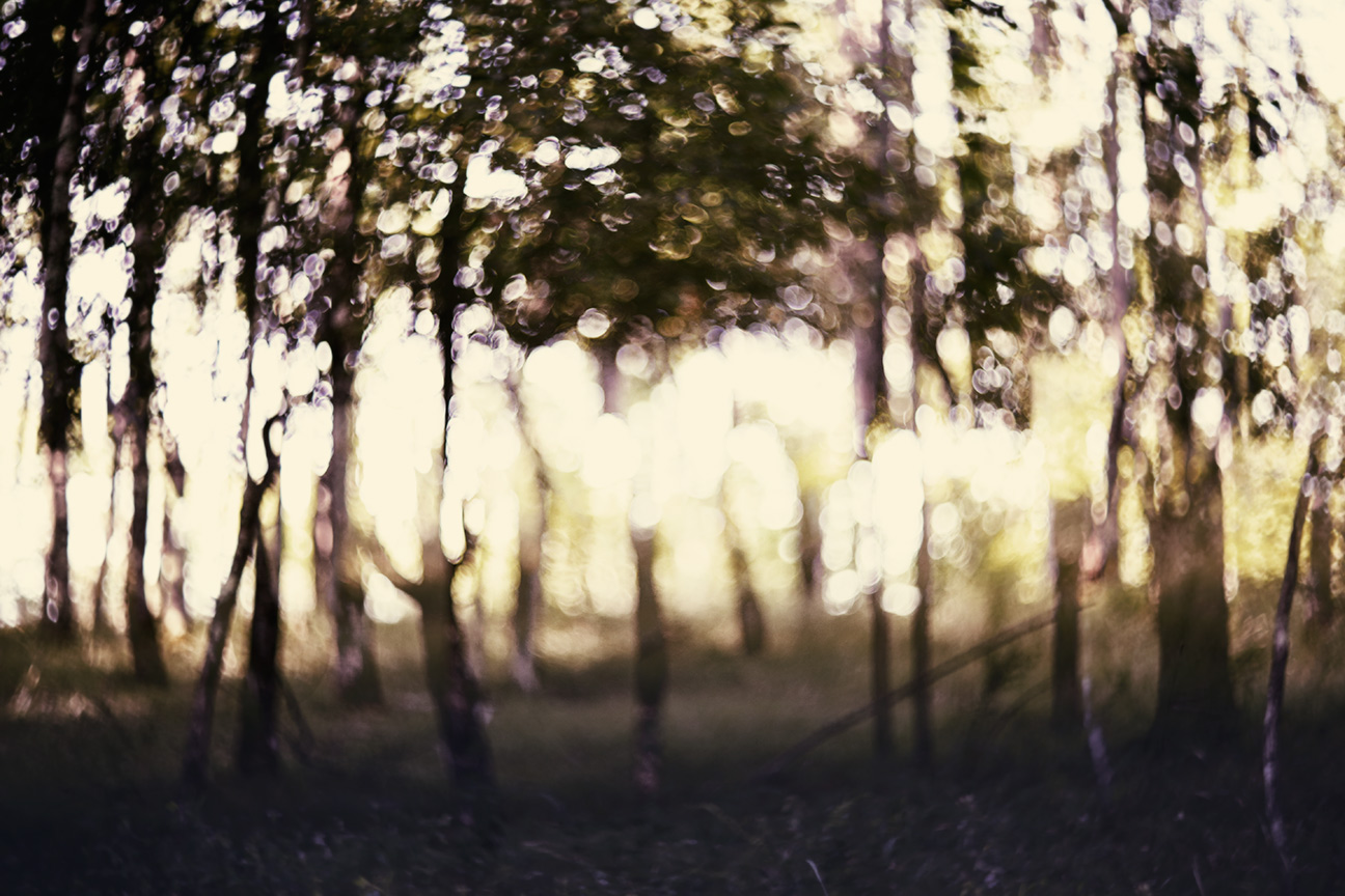 Forest_4445