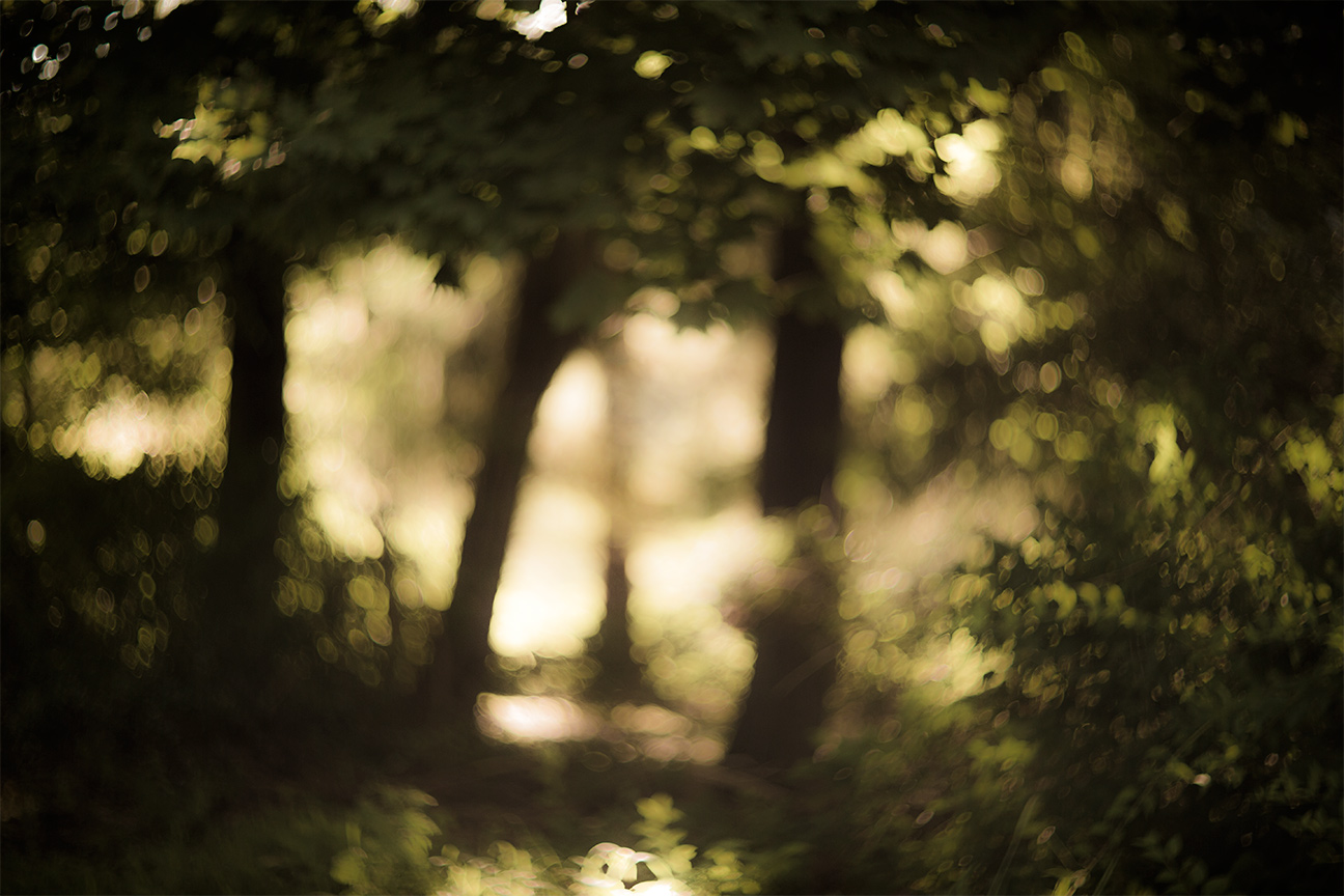 Forest_1259