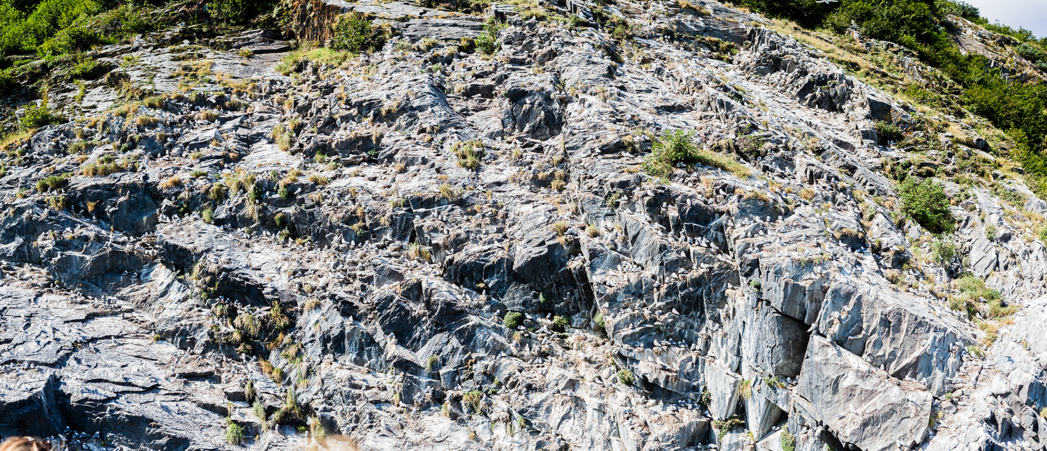 I took a similarly massive panorama of this rock face that was absolutely covered with gulls. The noise was absurd. (DSLR)