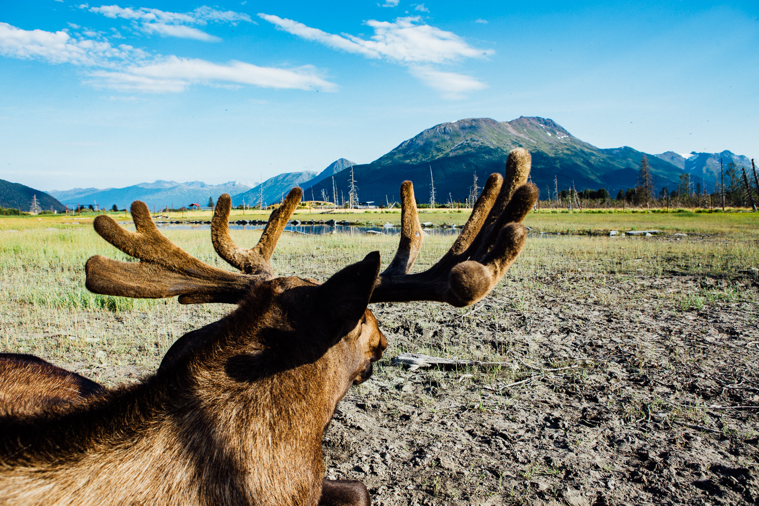 They don't joke around about wildlife in Alaska. I was really close to this moose. (DSLR)
