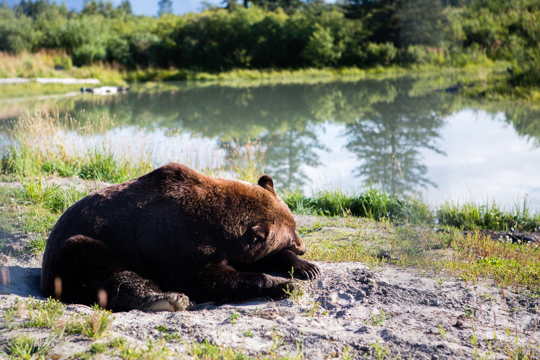 This bear is my spirit animal (DSLR)