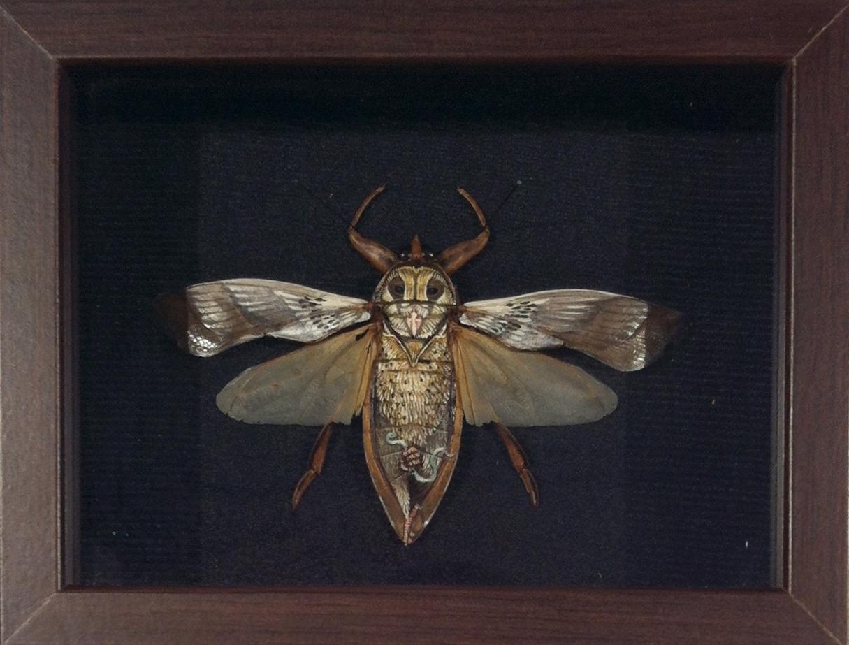 "Chris Brand ""Fukuro"" Acrylic on insect 8.5x6.5 3"" shadowbox SOLD"