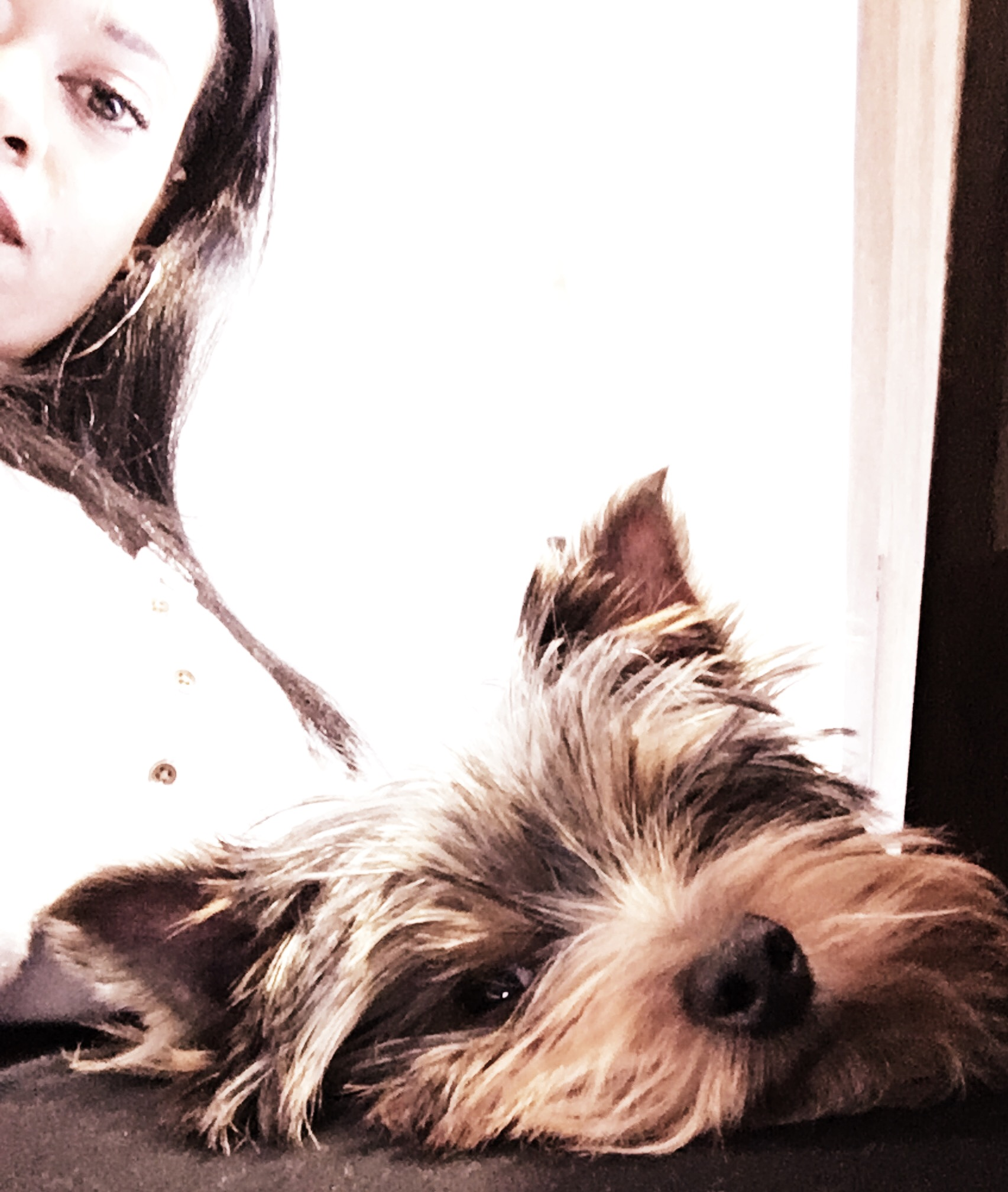 Meet the newest member of the Calligraphy Studio, Charlie Brown. He is the Yorkie that literally lives in my Lap. Cheers!
