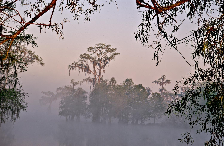 Foggy Morning Lake Martin