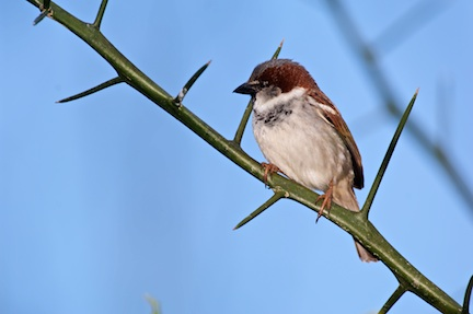 Sparrow on Cloudy Day