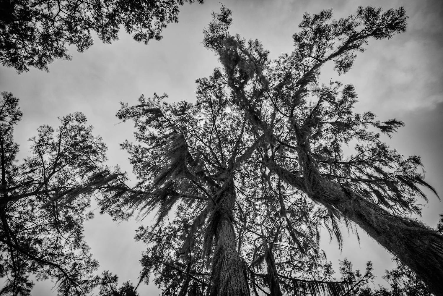A Cloudy day in the Atchafalaya Basin
