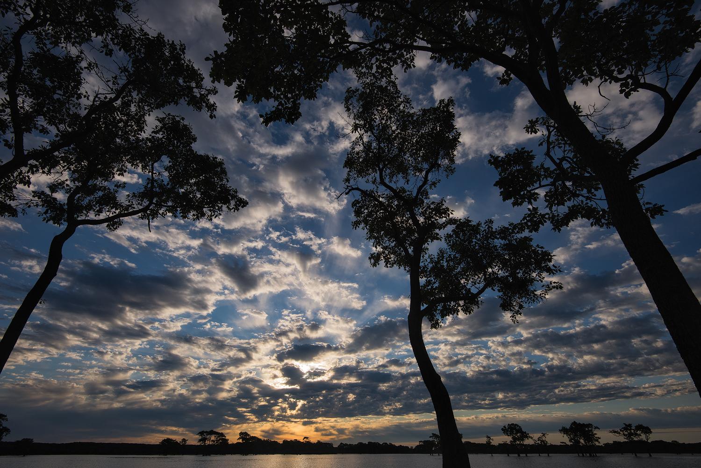 Tupelo at Sunrise - Millers Lake