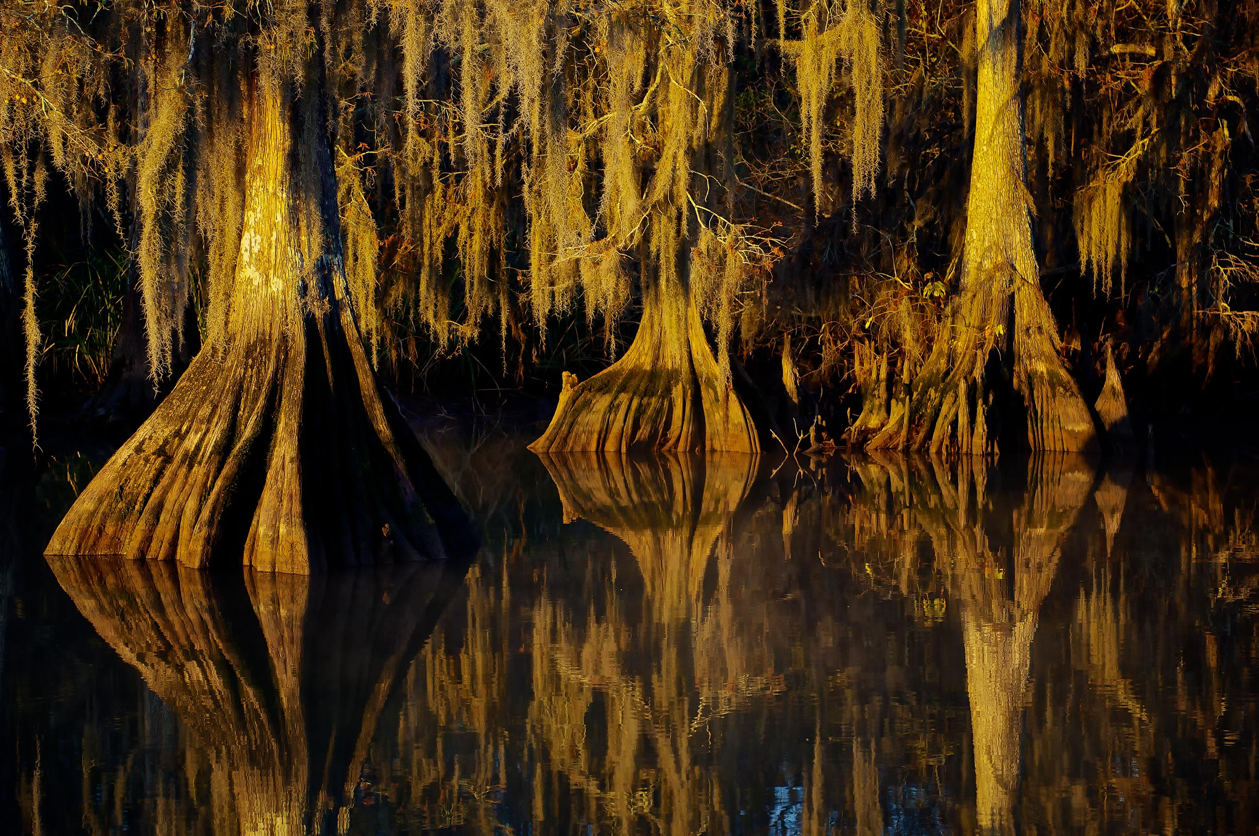 Cypress in the Swamp December 7th 2010