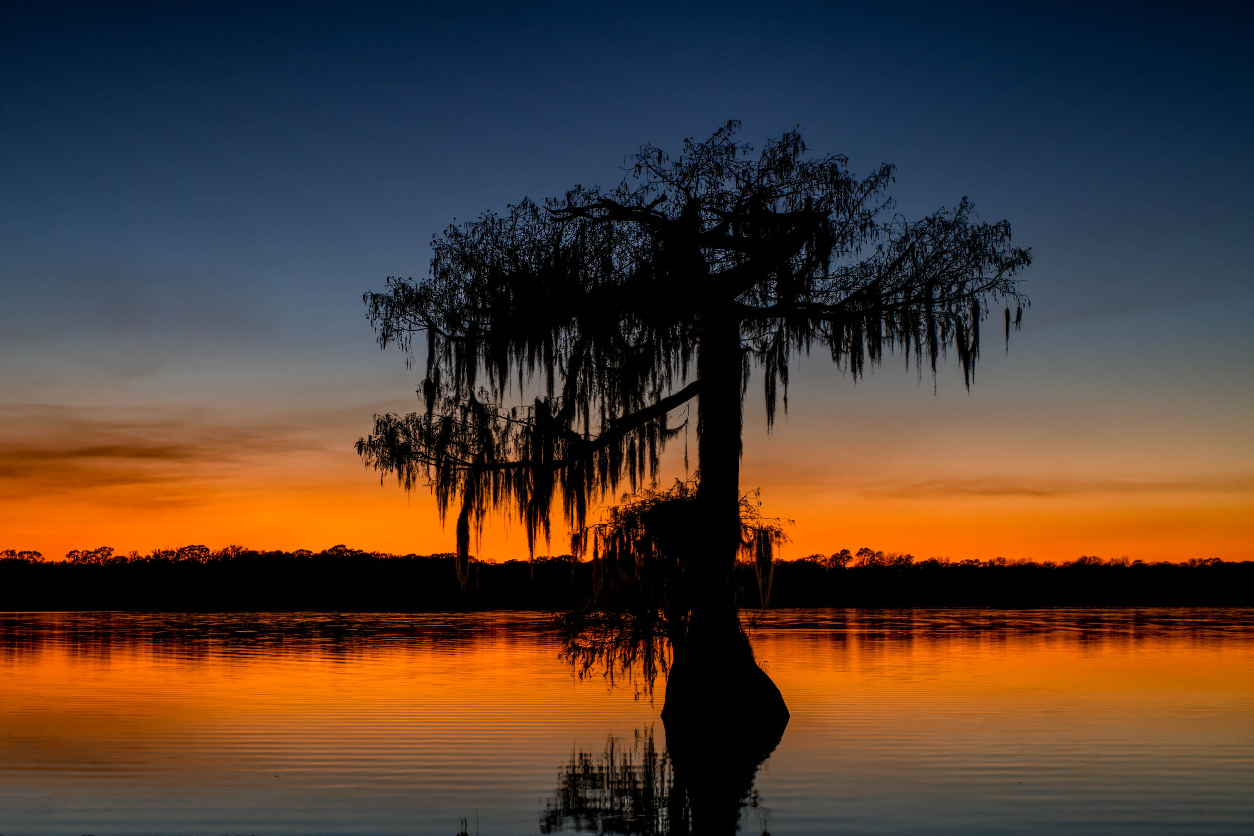 Lake Martin - Tree at Sunset