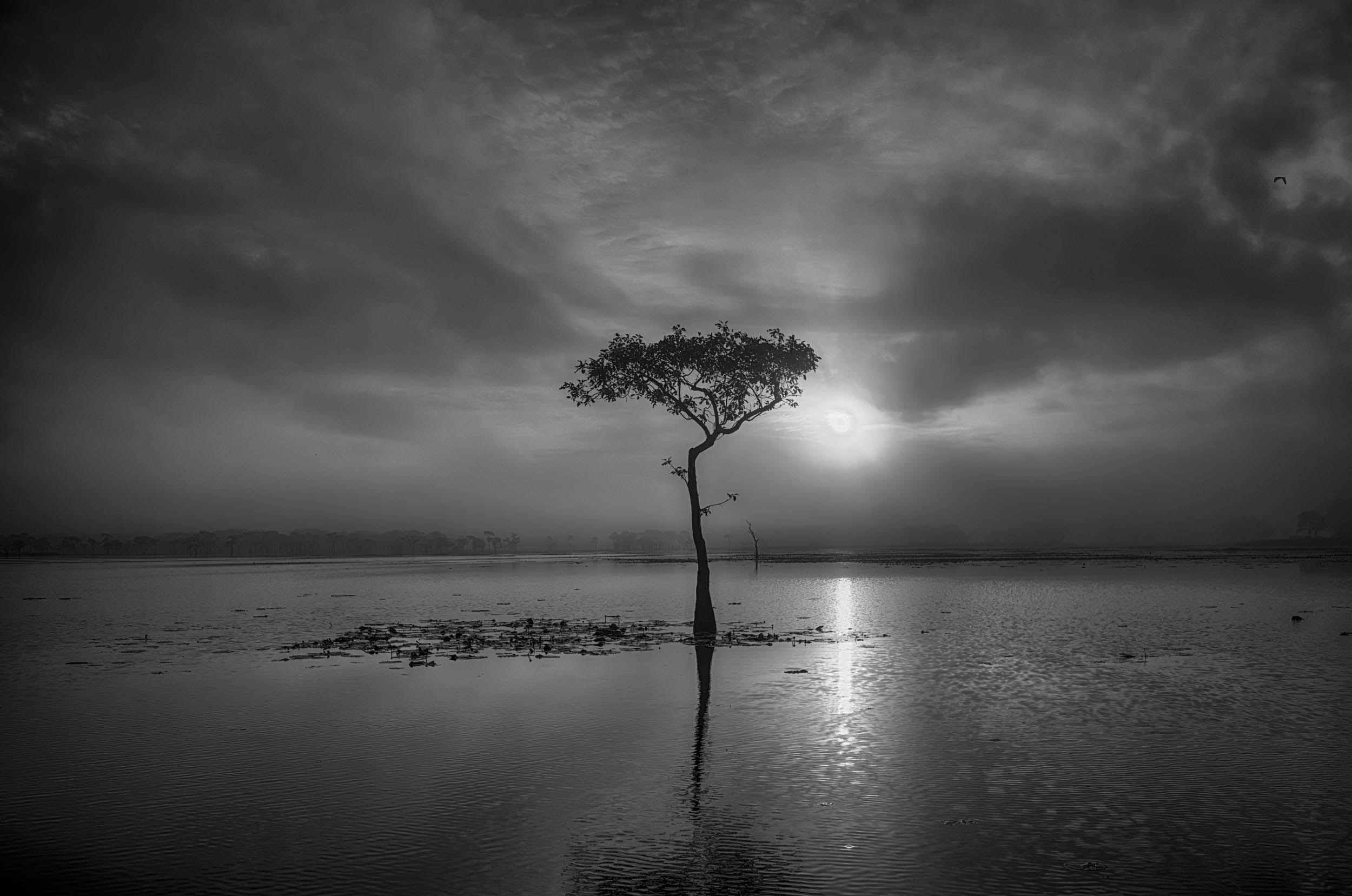 Backlit Tupelo Tree–Millers Lake