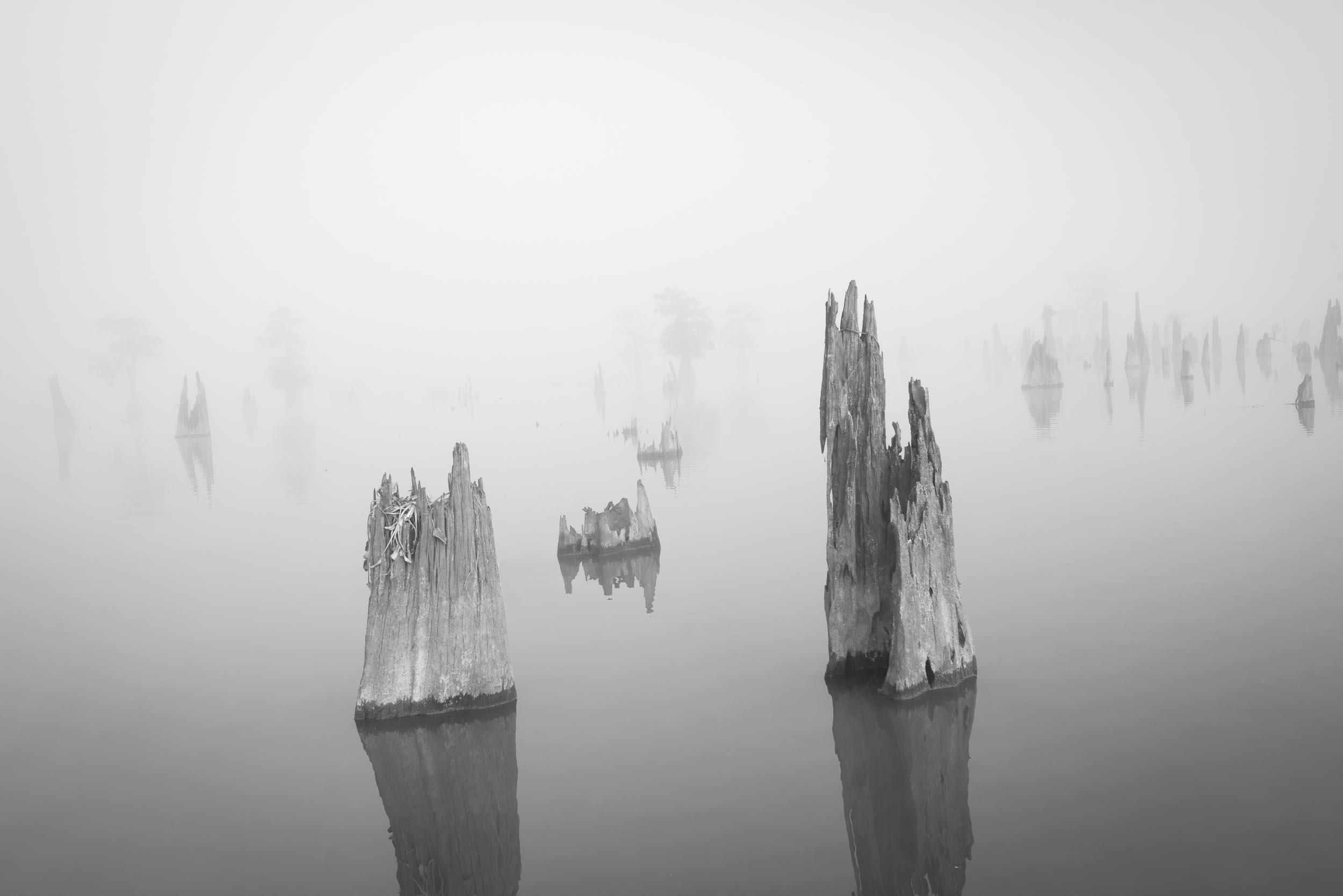 Cypress Stumps