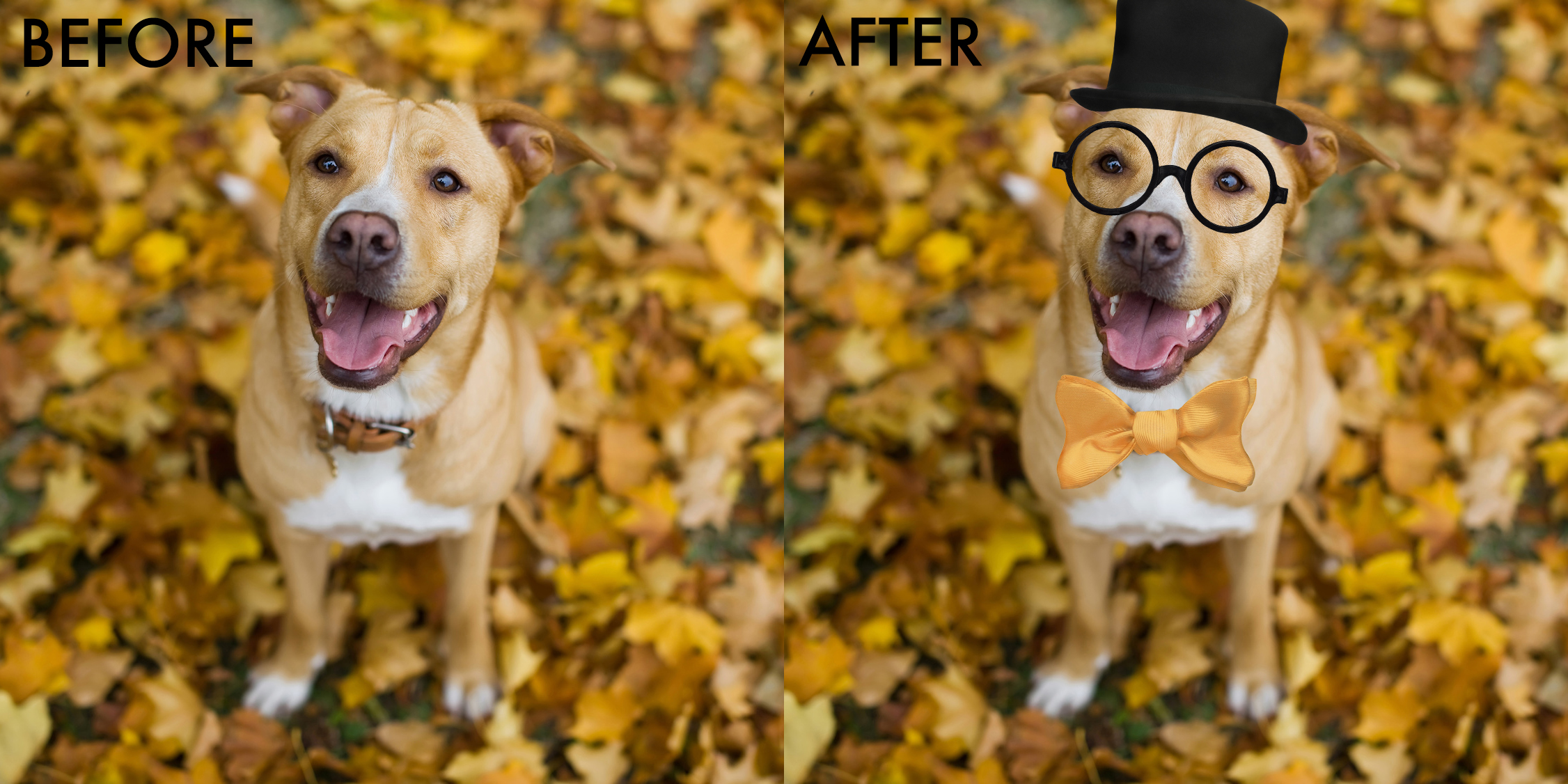 halloween dog before and aftr.jpg