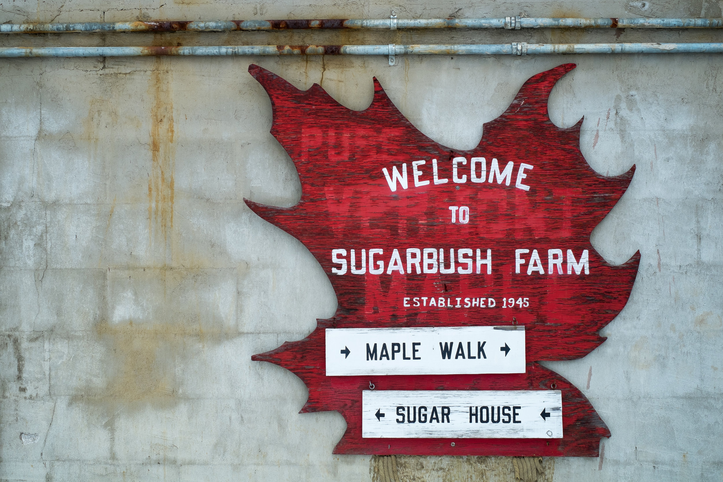 Maple Walk Sugar House