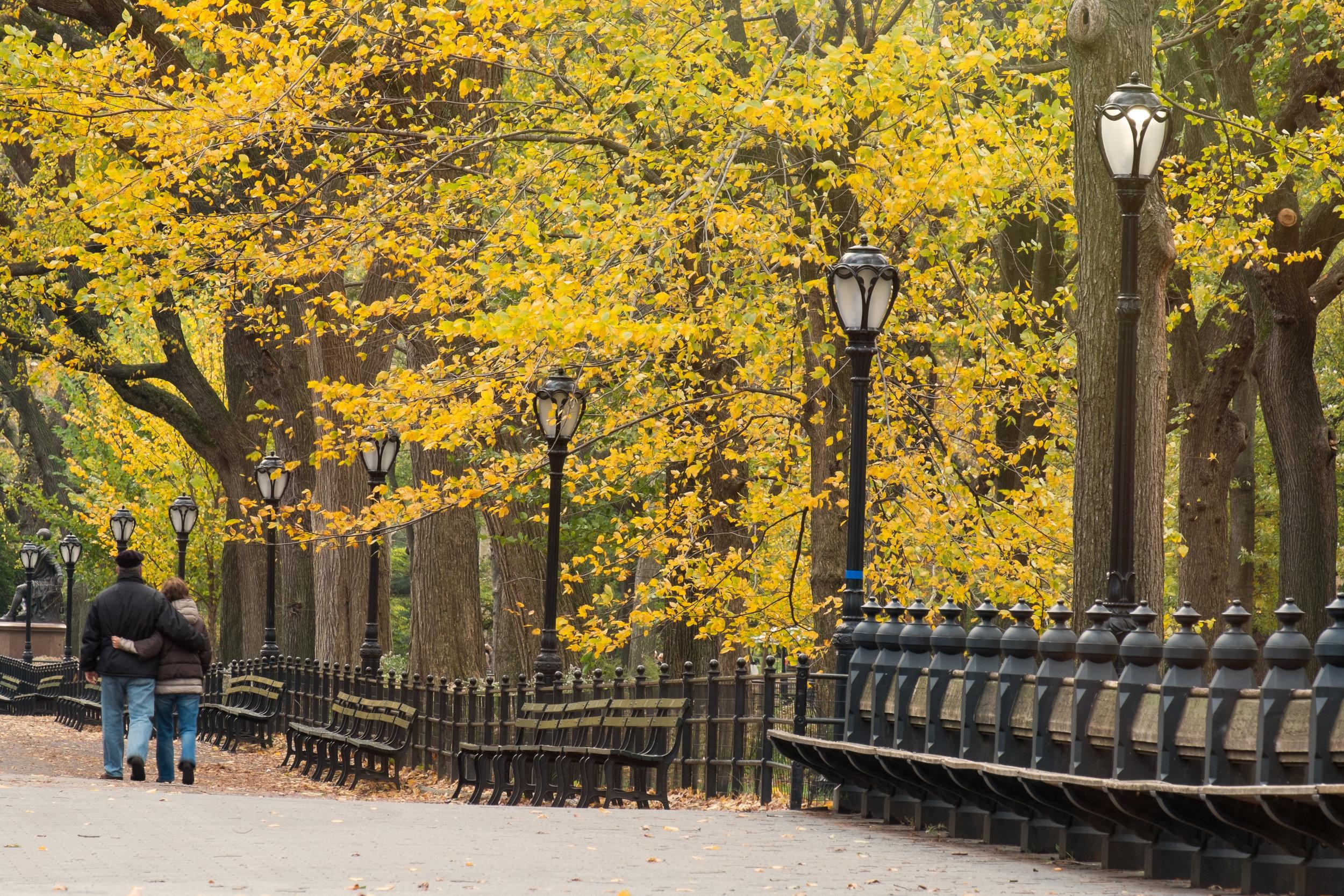 Central Park, New York. 2014.
