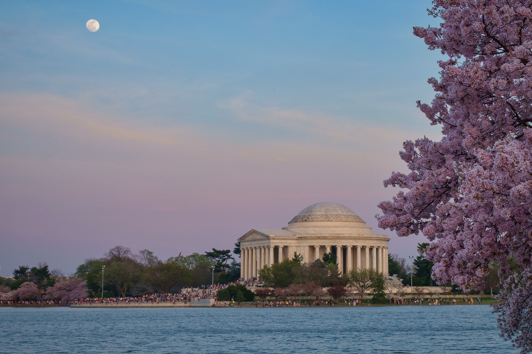 Cherry-Blossoms-Jefferson-Memorial.jpg