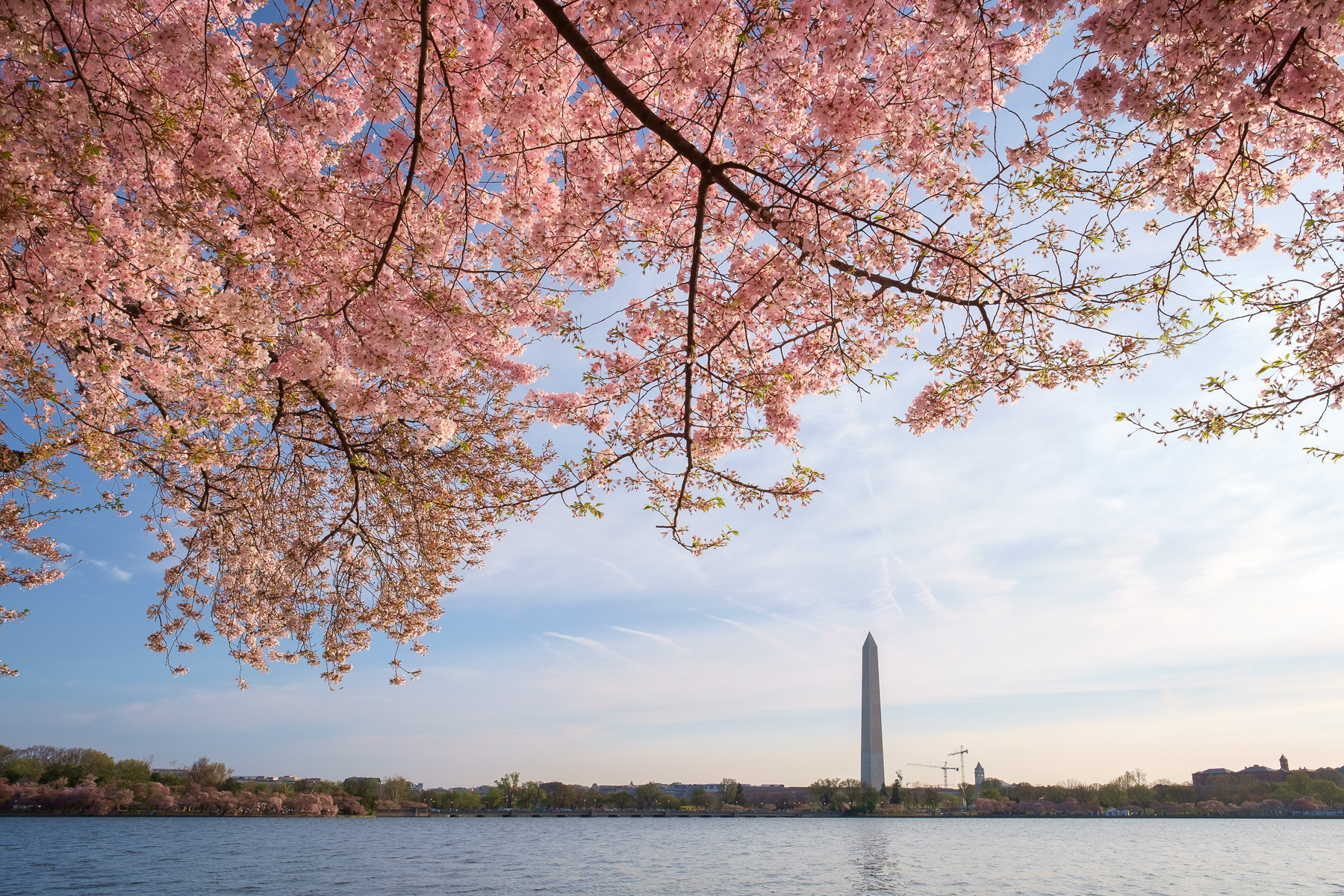 Cherry-Blossoms-Washington-Monument.jpg